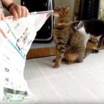 手軽さ満点コスパ満点、手作り猫おもちゃ「チラシマルメターノ」