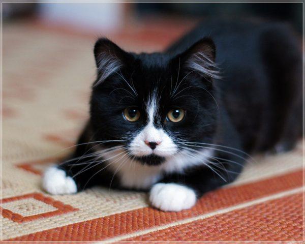 160715blackcat