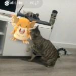 日本の猫より一足先に、『Pokémon GO』でラッタと遊ぶキジトラ猫