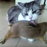 優しき猫の飴と鞭、甘噛みしながら毛づくろい