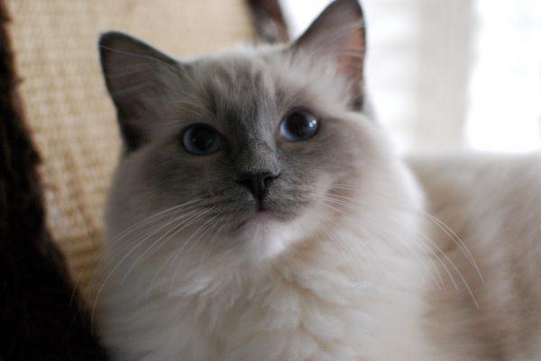 160723cat 600x401 - 本日の美人猫vol.197