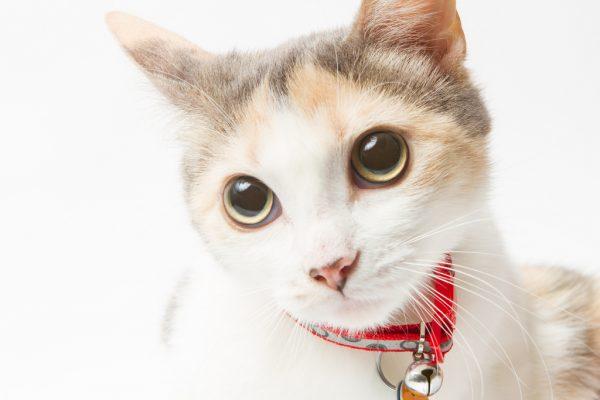 160821cat 600x400 - 本日の美人猫vol.201