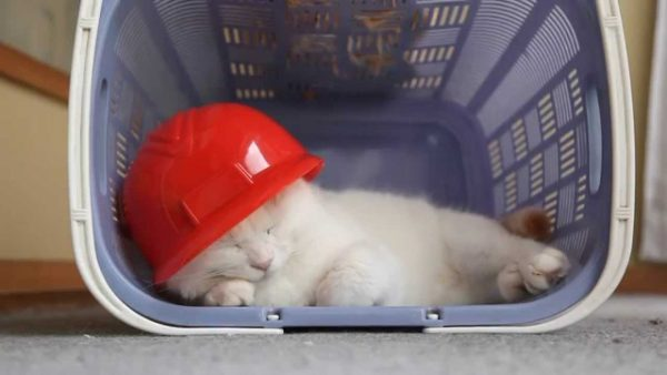160911carpcat 600x338 - 優勝の余韻に微睡む赤ヘル猫、四半世紀の万感込めて