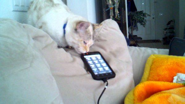 160919iPhonecat 600x338 - 子猫の声で鳴き出すスマホ、咥えて連れて寝床まで