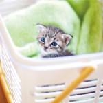 預かる命の変わらぬ重さを知る一冊、『赤ちゃんネコのすくいかた』