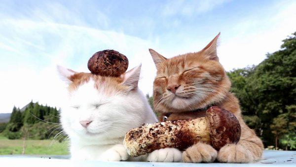 161018matsutakecats