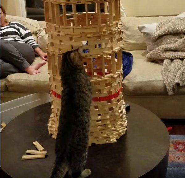 161023cat 600x578 - 猫による巧みなビルの垂直破壊、壊さず入って中から発破