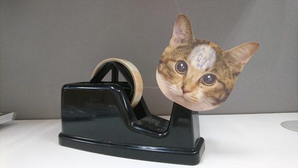 161024nekonohitai01 600x338 - 狭さが生み出す創意工夫、猫の額のふせんメモ