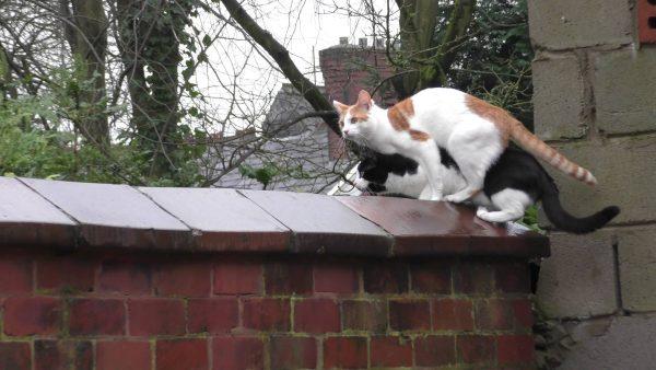 161112cats 600x338 - 重なって困惑顔の猫二匹、ジャンプの瞬間まさかのシンクロ