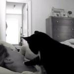 優しき猫のソフトな目覚まし、最後の手段は腹に乗り