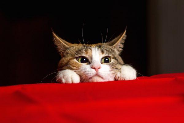 161203cat 600x400 - 本日の美人猫vol.215