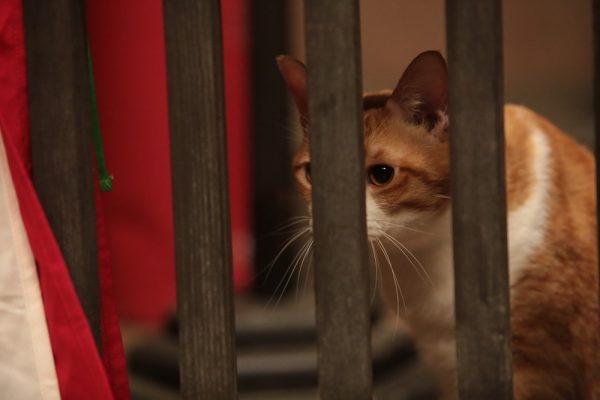 161212kintoki03 600x400 - 抱かれる姿は甘える家猫、その正体は猫忍