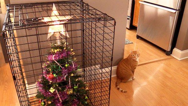 161220Cattree 600x338 - クリスマスツリーを猫から守る10の方法
