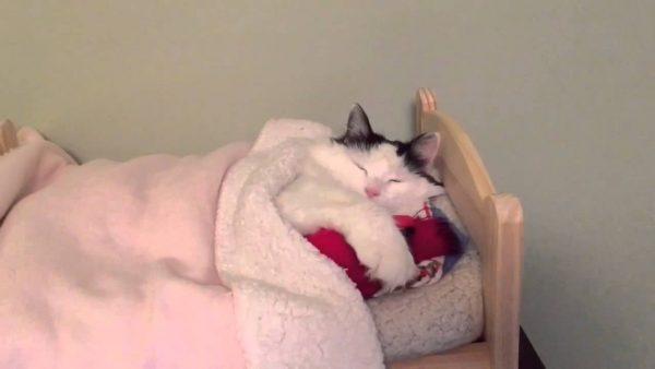 161222catsleep 600x338 - ベッドの布団で眠る猫、カメラに起こされそのまま二度寝