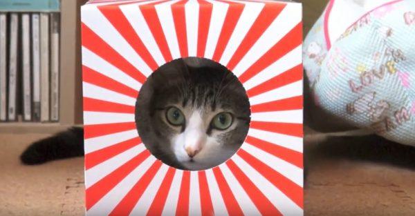 161231hatsuhinode 600x313 - 今年も猫が日本を照らす、初日の出っぽい箱芸で