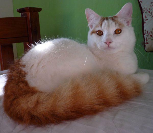 170103cat 600x524 - 本日の美人猫vol.219