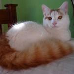 本日の美人猫vol.219