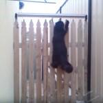 フェンスの上でクルクル回る、鼠返しならぬ猫返し