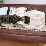 い草を用いた猫ちぐら、ソファの上にも意外と似合う