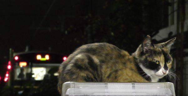 170117cat 600x308 - 夜のお勤め三毛猫駅員、降りゆく人の背中を見送り