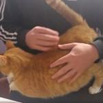 猫があなたを愛していると、伝えてくれる7つのサイン