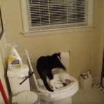 郷に入りては郷に従い、用足す猫はトレパで隠して