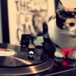DJ三毛猫アナログ派、こすって回して魅せるスタイル