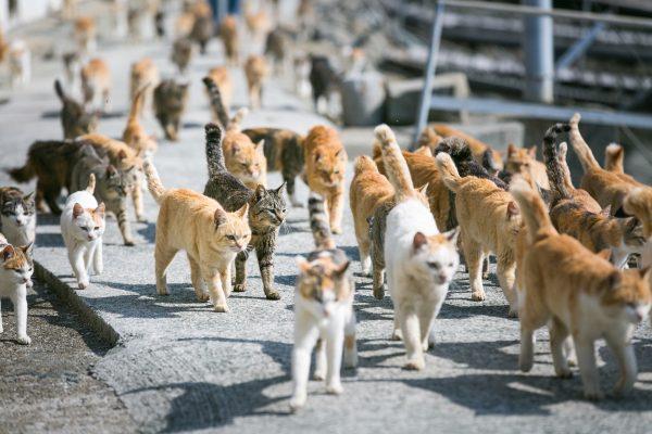 170219osaragi02 600x400 - 500匹以上の猫と暮らした作家の猫写真展、2/22猫の日から開催