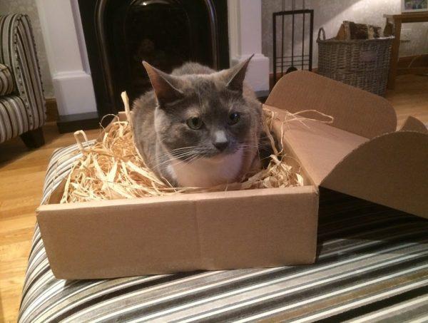 170222cat 600x453 - 快適な寝床でグースカ眠る猫、うらやむ隣人に起こされる