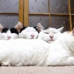 夢の世界へ一直線、ぬくぬく猫肌長枕