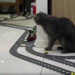 レゴの列車を見守る猫、働く姿は鉄道員