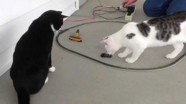 170321cat 600x338 - 目の前を通るアイツは必ず倒す、守備力高い白黒猫
