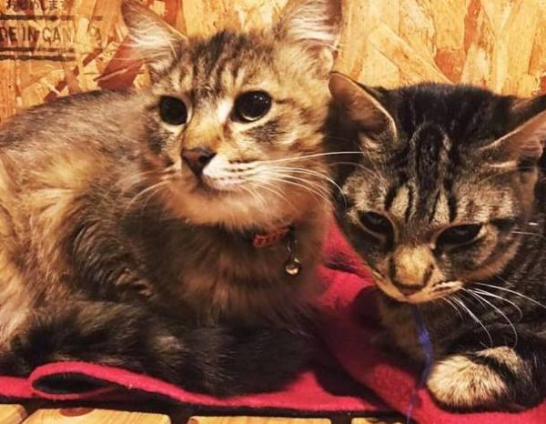"170422catshelter03 600x466 - 「旅館で猫保護」第2ステージ、猫庭""拡張""プロジェクト"