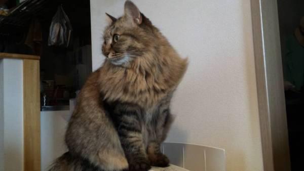 170504cat 600x338 - 空気清浄機に乗った猫、爽やかな風に満足げな顔