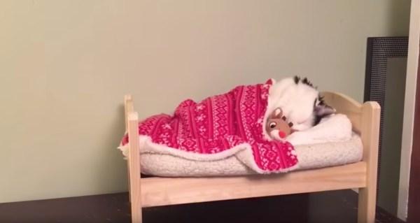 170528bedcat 600x319 - 目指すは猫用マイベッド、布団を掛けたら即就寝