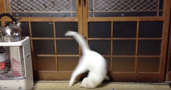 170627cat 600x317 - 硝子障子を開けたい猫、勢い余って華麗に側転