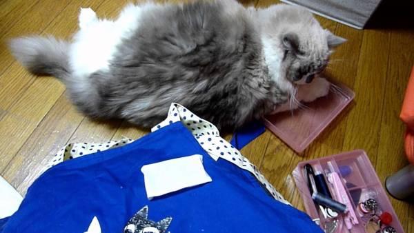 170830cat 600x338 - 猫からあふれる甘える気持ち、裁縫仕事はなかなか進まず