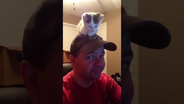 170909cat 600x338 - おっさんの頭の上に座る猫、カメラ目線のドヤ顔も納得