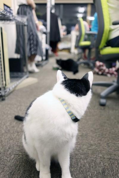 170927 IMG 7371 2000 400x600 - 猫とはたらくvol.01「目的は、猫を職場で飼うことではなく、保護できる猫を増やすため」