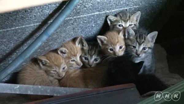 """171027Darwincat04 600x338 - 「ダーウィンが来た!」で2週連続猫大特集、""""猫視聴率""""にも期待高まる"""