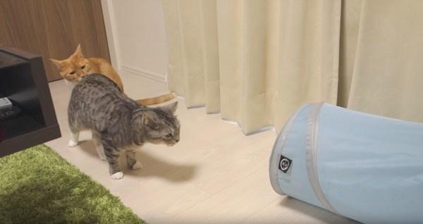 171101cats 600x318 - ペットボトルの蓋で興奮する猫たち、トンネルダッシュを繰り返し