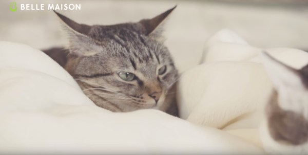 171103neko 600x303 - 保護猫の感覚活用販促動画、毛布にとろける猫たちの顔