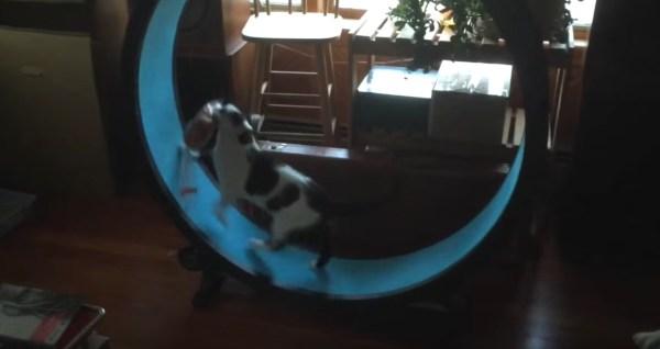 171206cat 600x318 - 袋ごとパンを咥えて逃げ続ける猫、回し車で平常装う