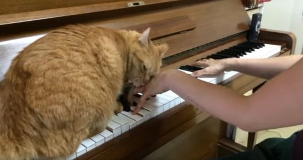 171207catonpiano 600x318 - 鍵盤に猫と一緒にピアノの演奏、結局両手は猫が占有