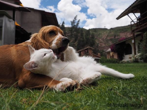"171219catanddog01 600x450 - 岩合さんの""猫と犬の写真展""、年末年始に全国各地で"