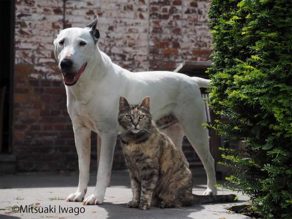 "171219catanddog02 600x450 - 岩合さんの""猫と犬の写真展""、年末年始に全国各地で"