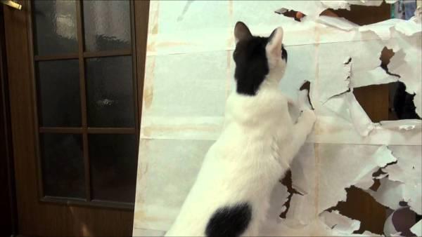 171225cat 600x338 - 猫の手も借りたい年末大掃除、古い障子にとどめを刺す猫