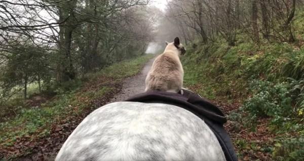 180103cat 600x318 - 颯爽とお馬の背中に乗った猫、手綱も使わず乗りこなし