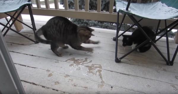 180122catsnow 600x318 - 初めての雪にエキサイトする猫、雪に負けじと自らが舞い