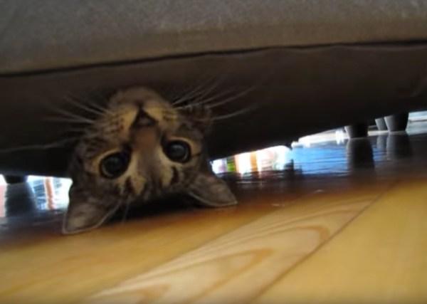 180204cat 600x427 - ソファの下の怪しい膨らみ、ひょっこり顔出すキジトラ子猫